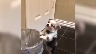 با نمک ترین سگ و گربههای دنیا