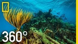 زیر دریا رو 360 درجه ببین !
