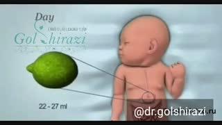 میزان حجم معده نوزاد