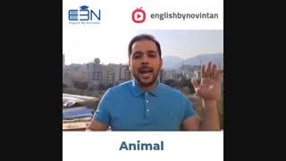 اصطلاحات انگلیسی مربوط به حیوانات (1)