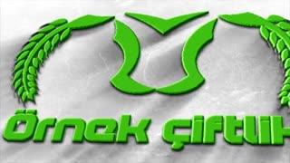 لوگو های ساخته شده توسط تیم شایق