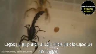 حمله عنکبوت به پرنده - سم عنکبوت کش قوی