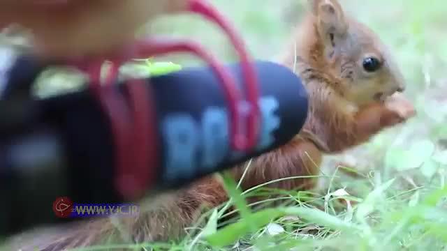 صدای ضبط شده سنجاب هنگام غذا خوردن